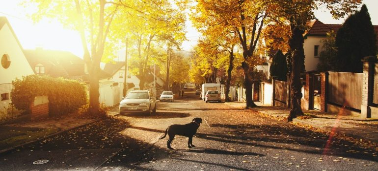 a dog standing in a suburban street